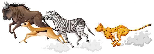 Il gruppo di animali selvatici sta eseguendo lo stile del fumetto isolato su priorità bassa bianca