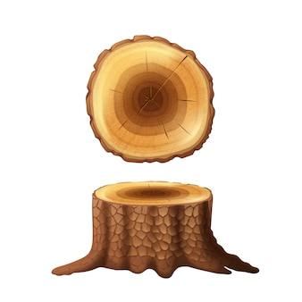 Il vecchio lato del ceppo dell'albero forestale tagliato e le icone di vista della sezione trasversale hanno messo l'estratto