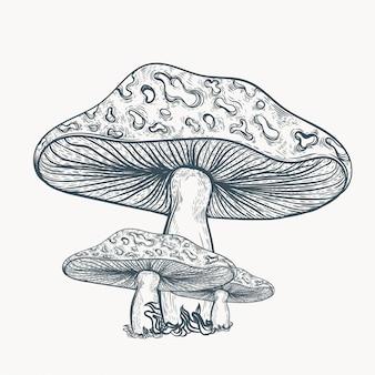 Illustraton di funghi disegnati a mano