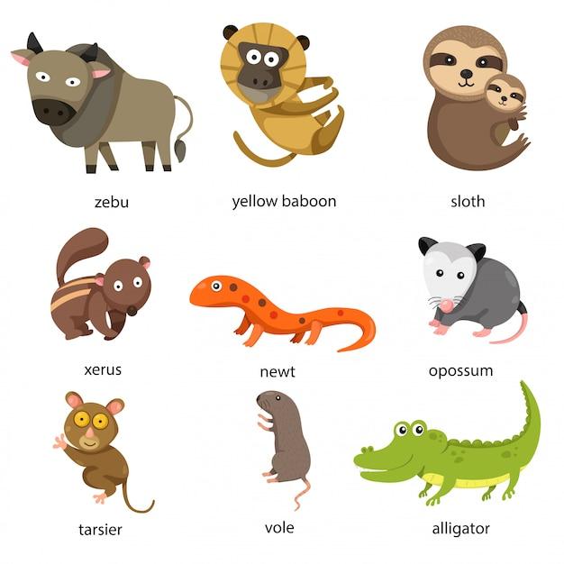 Illustratore di animali dello zoo