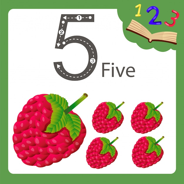 Illustratore di cinque numeri lampone