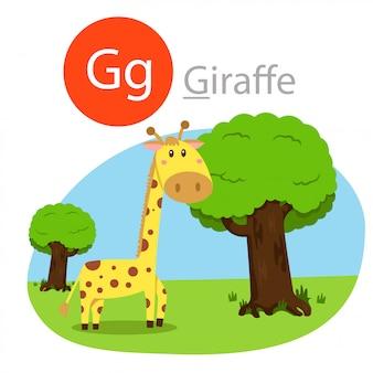 Illustratore di g per animale giraffa