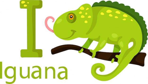 Illustratore di i con iguana
