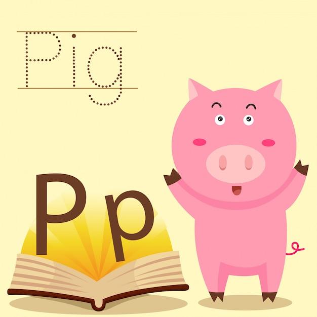 Illustratore di p per il vocabolario di maiale