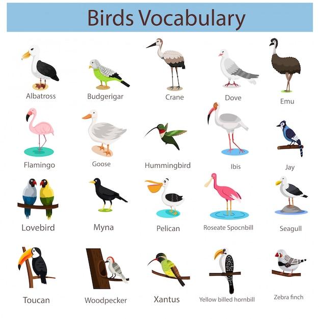 Illustratore di vocaboli di uccelli