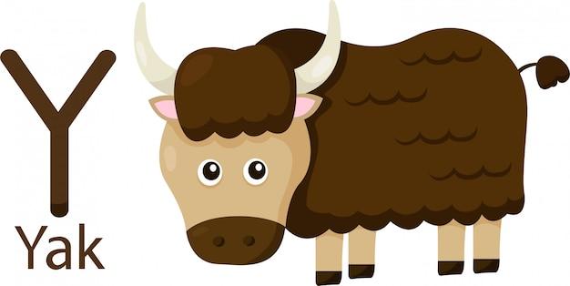 Illustratore di y con yak