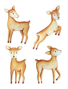 Illustrazione ad acquerello con simpatici cervi neonati.