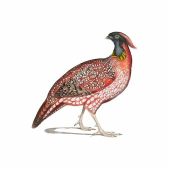 Illustrazione animale vintage