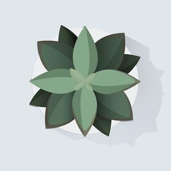 Illustrazione botanica di vettore della decorazione della pianta da appartamento