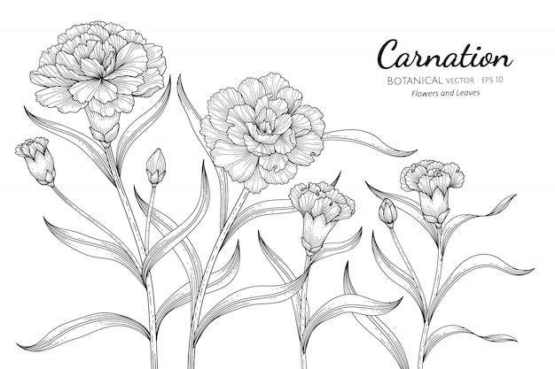 Illustrazione botanica disegnata a mano del fiore e della foglia del garofano con la linea arte su bianco