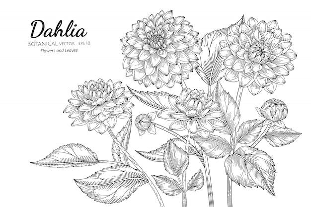 Illustrazione botanica disegnata a mano del fiore e della foglia della dalia con la linea arte su bianco