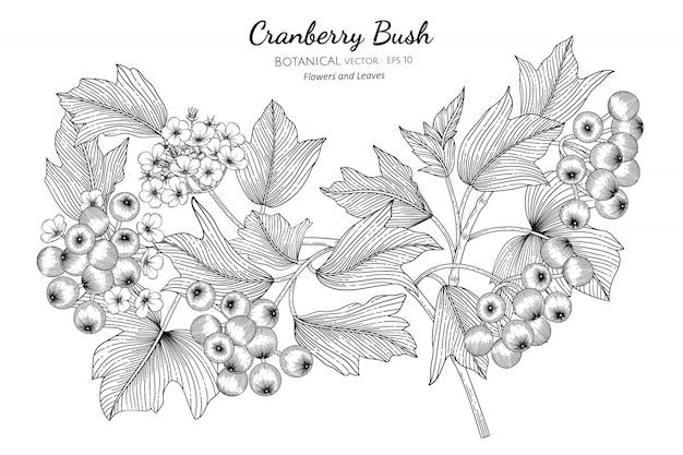 Illustrazione botanica disegnata a mano della frutta americana del mirtillo rosso con la linea arte su bianco