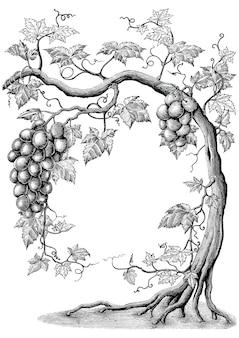 Illustrazione d'annata dell'incisione del disegno della mano dell'albero di vite su fondo bianco