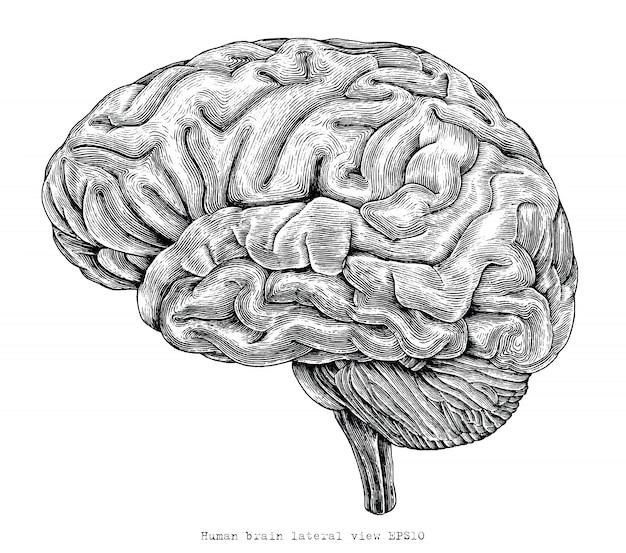 Illustrazione d'annata dell'incisione del disegno della mano di vista laterale del cervello umano