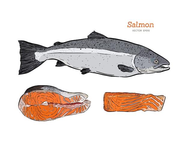 Illustrazione d'annata di vettore di pesce schizzo disegnato a mano