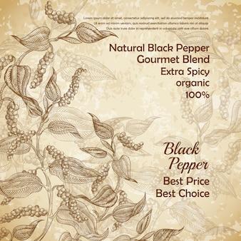 Illustrazione d'epoca della pianta di pepe nero con foglie e pepe in grani