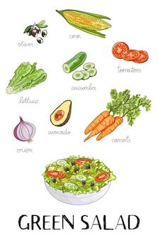 Illustrazione degli ingredienti di insalata verde disegnati a mano