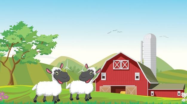 Illustrazione del cartone animato felice due pecore in fattoria