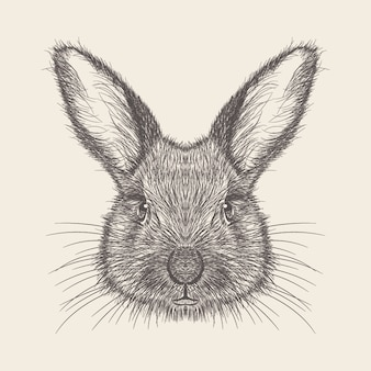 Illustrazione del coniglio di design disegnato a mano.