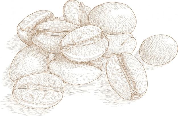 Illustrazione del disegno del chicco di caffè