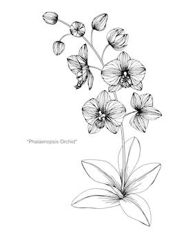 Illustrazione del disegno del fiore dell'orchidea