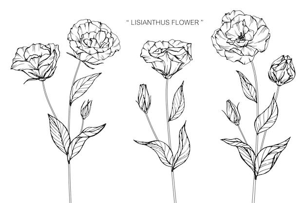 Illustrazione del disegno del fiore di lisianthus.