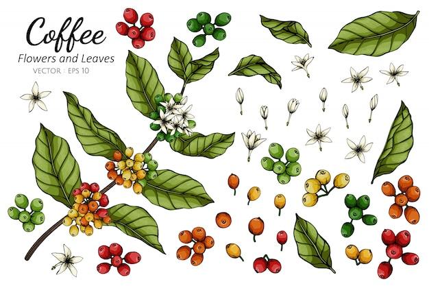 Illustrazione del disegno del fiore e della foglia del caffè con la linea arte sugli ambiti di provenienza bianchi.