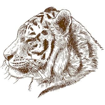 Illustrazione del disegno dell'incisione della tigre siberiana o della testa della tigre dell'amur