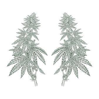 Illustrazione del disegno della mano dell'erbaccia