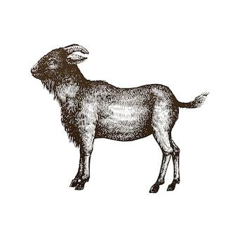 Illustrazione del disegno della mano della mucca
