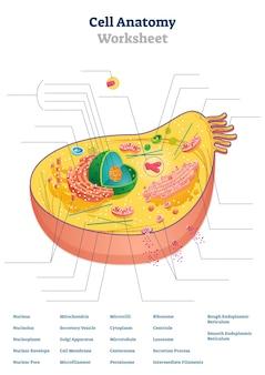 Illustrazione del foglio di lavoro di anatomia cellulare
