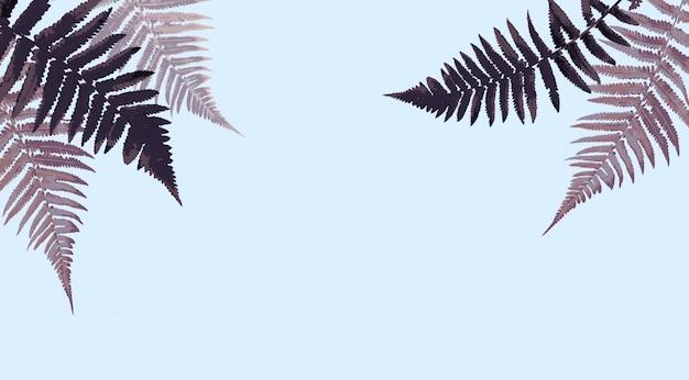 Illustrazione del fondo di vettore della foglia della felce