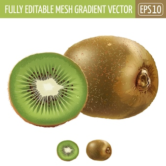 Illustrazione del kiwi su bianco