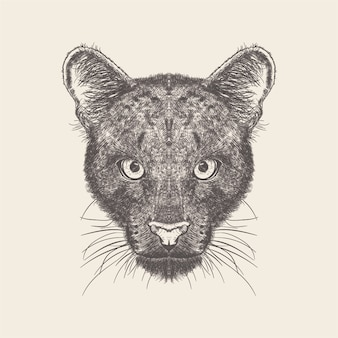 Illustrazione del lupo di design disegnato a mano.
