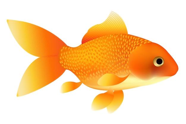 Illustrazione del pesce rosso