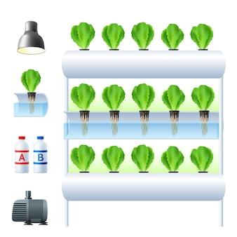 Illustrazione del sistema di coltura idroponica
