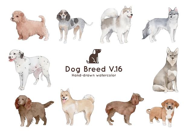 Illustrazione dell'acquerello di razza di cane