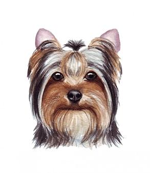 Illustrazione dell'acquerello di un cane divertente. razza popolare. cane. yorkshire terrier. carattere fatto a mano isolato su bianco