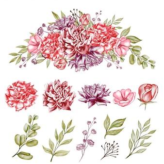 Illustrazione dell'acquerello isolata fiore delle peonie