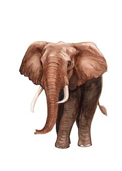 Illustrazione dell'elefante dipinta a mano dell'acquerello