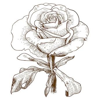 Illustrazione dell'incisione del fiore rosa
