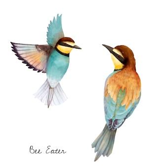 Illustrazione dell'uccello di mangiatore di ape isolato su priorità bassa bianca