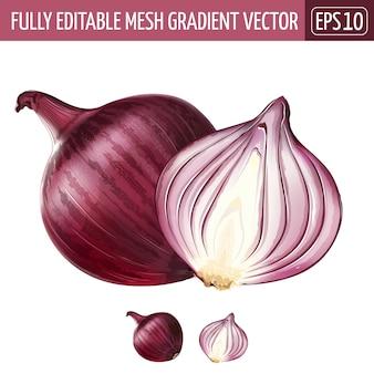 Illustrazione della cipolla rossa su bianco