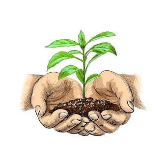 Illustrazione della giovane pianta con terra nelle mani. palme che tengono un germoglio nello stile di abbozzo su priorità bassa bianca