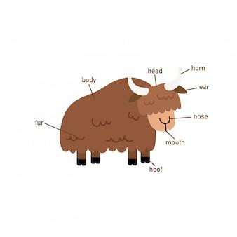 Illustrazione della parte del vocabolario yak di body.vector