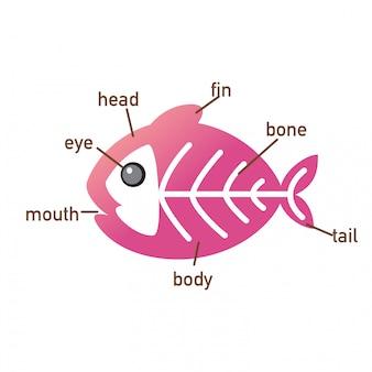 Illustrazione della parte di vocabolario del pesce dei raggi x di body.vector