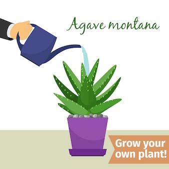 Illustrazione della pianta dell'agave d'innaffiatura della mano