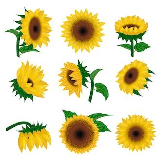Illustrazione della pianta della natura, del fiore e del fiore floreale di estate del fiore di giallo di vettore del girasole