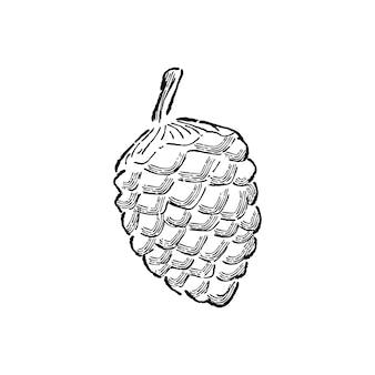 Illustrazione della pianta