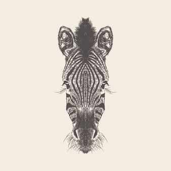 Illustrazione della zebra, progettazione disegnata a mano.